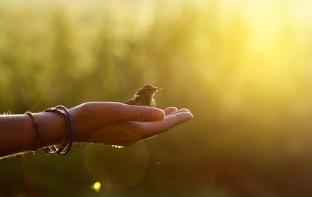 25799002 - ecology concept - bird on a hand in the morning
